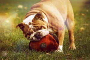 Tony Dog - Happy Again - Ergänzungsfuttermittel für Hunde